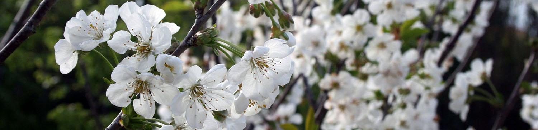 flores_transmitem_tranquilidade